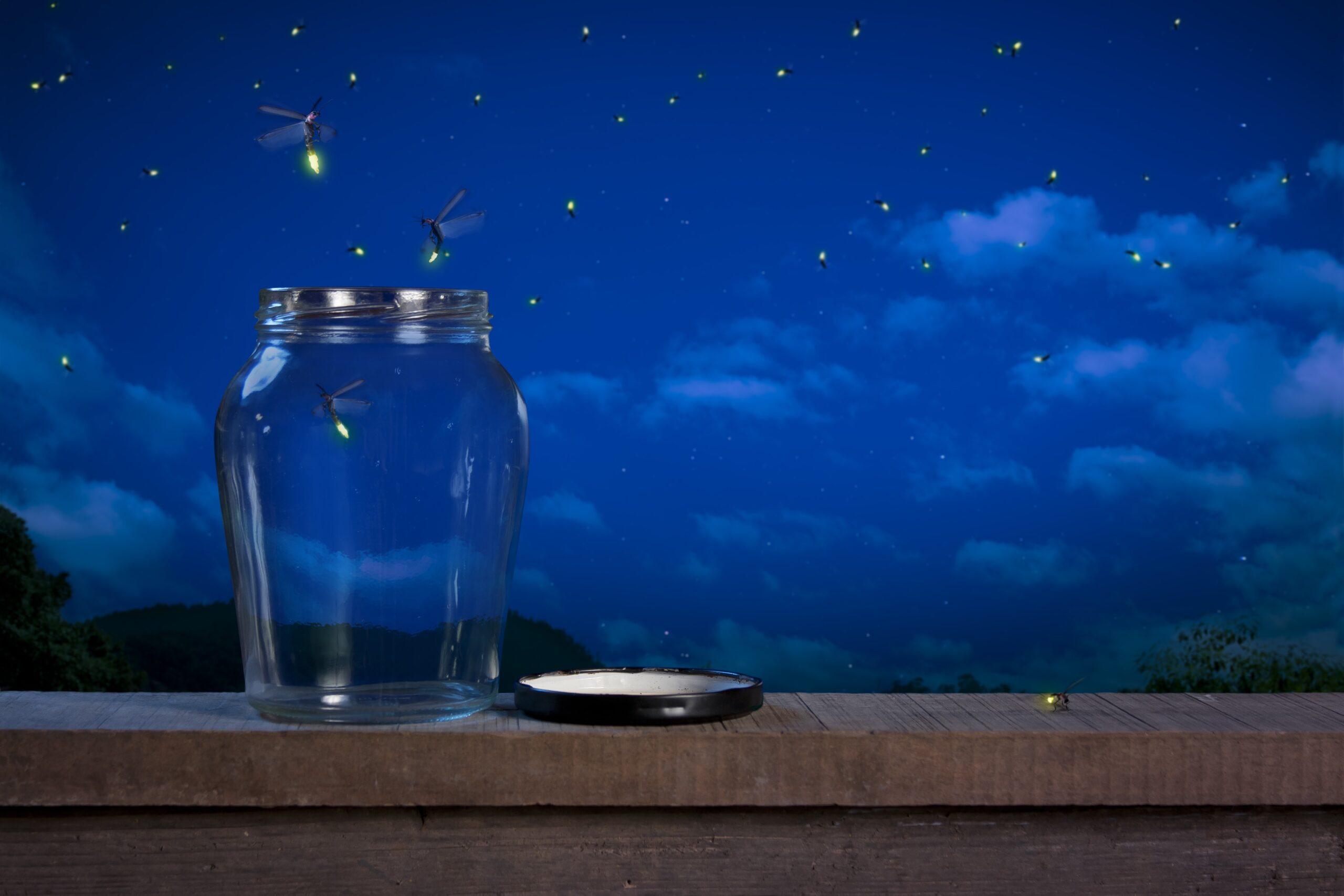 What diminishing lightening bugs show us