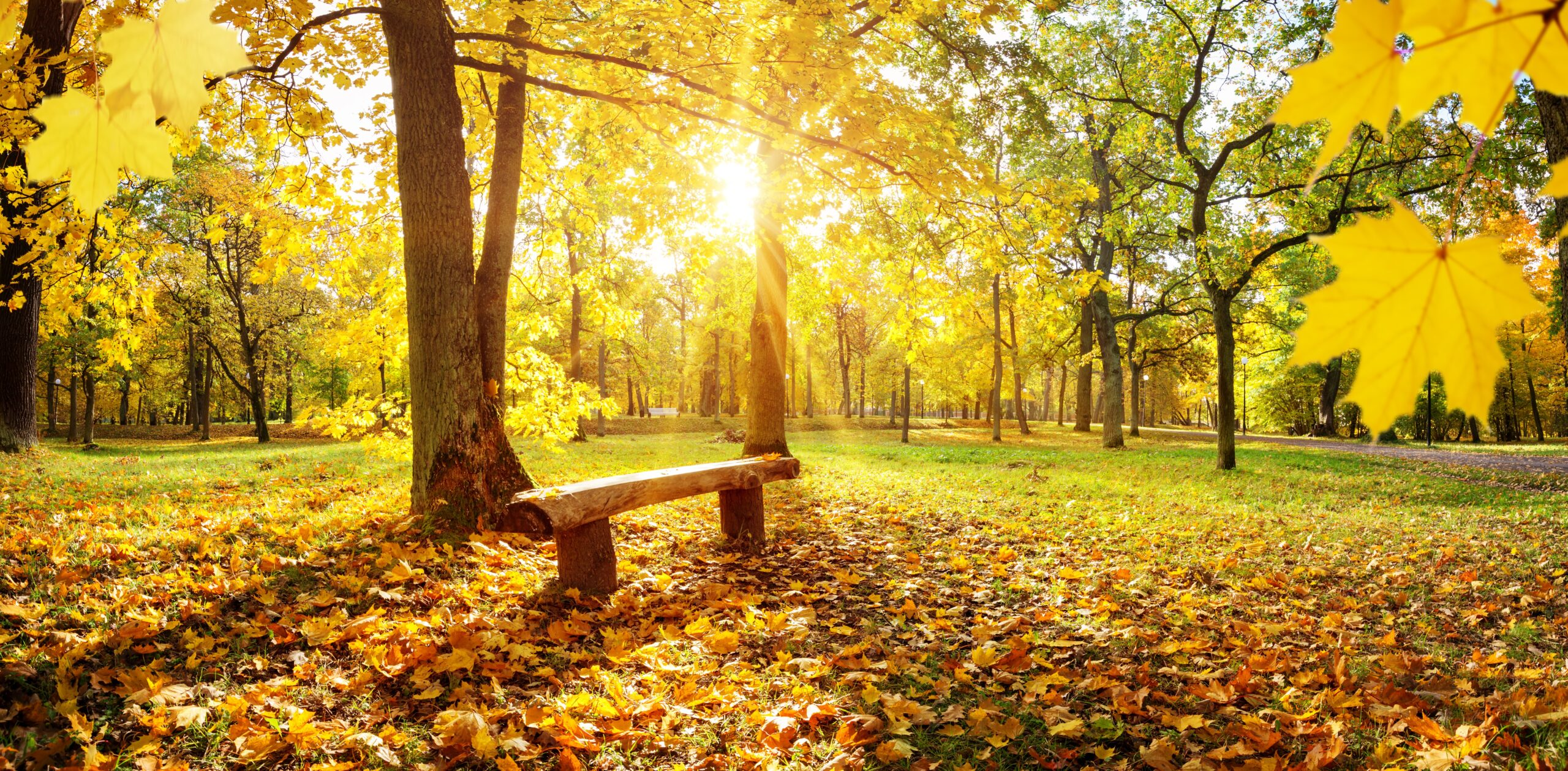 Ways to Enjoy Fall in its fullest