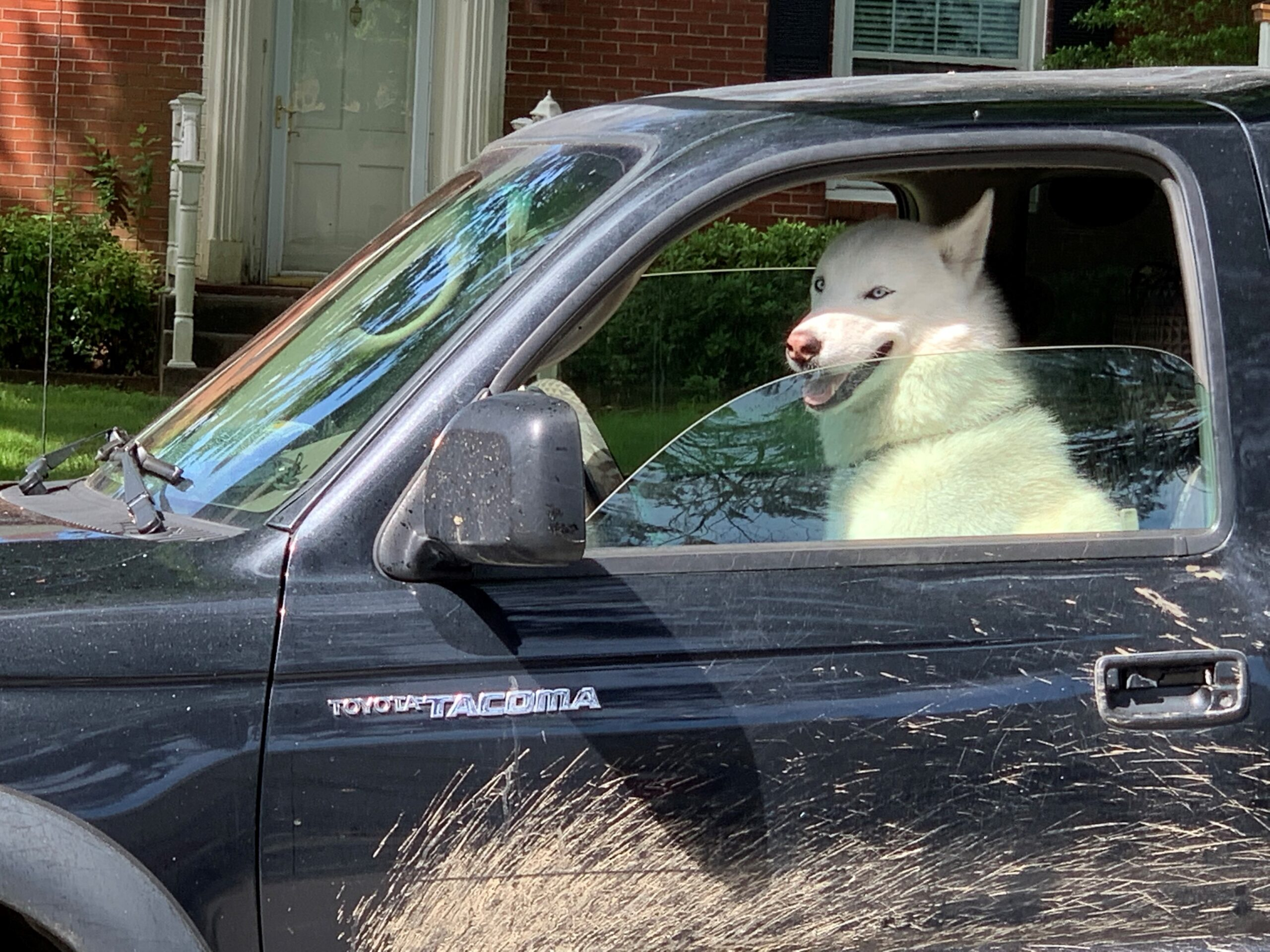 what we learn from a dog in the driver's seat